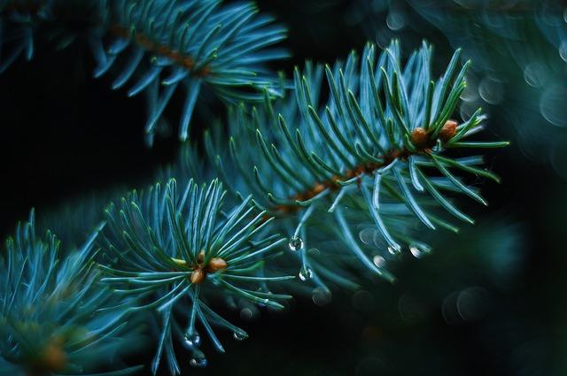 pine-1722699_640